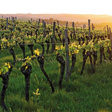 Fine Vines: Lebanese wine
