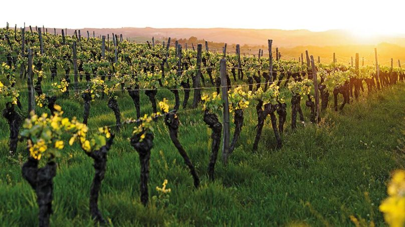 Fine Vines: Lebanese wine