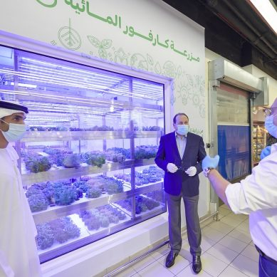 The rise of hydroponic farming in the UAE