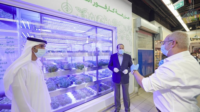 The rise of hydroponic farming in the UAE: The Carrefour example