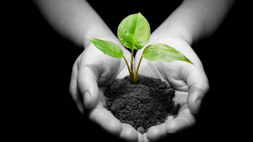 Sustainability Plans: Going Green While Staying In The Black