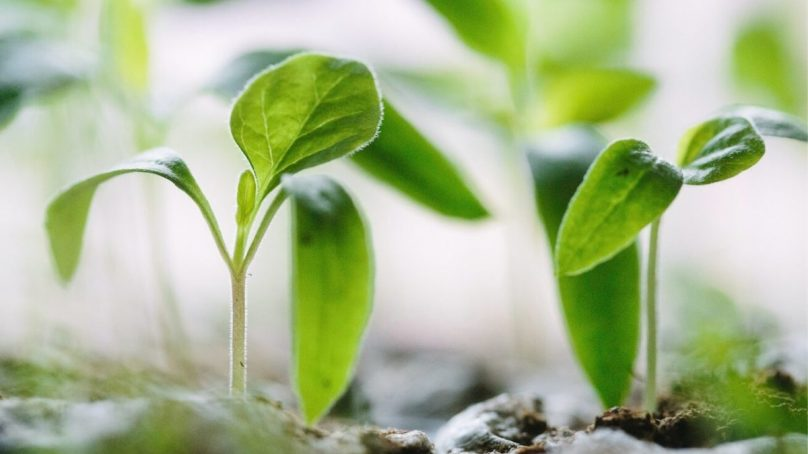 Planting the seed : how to empower the next generation